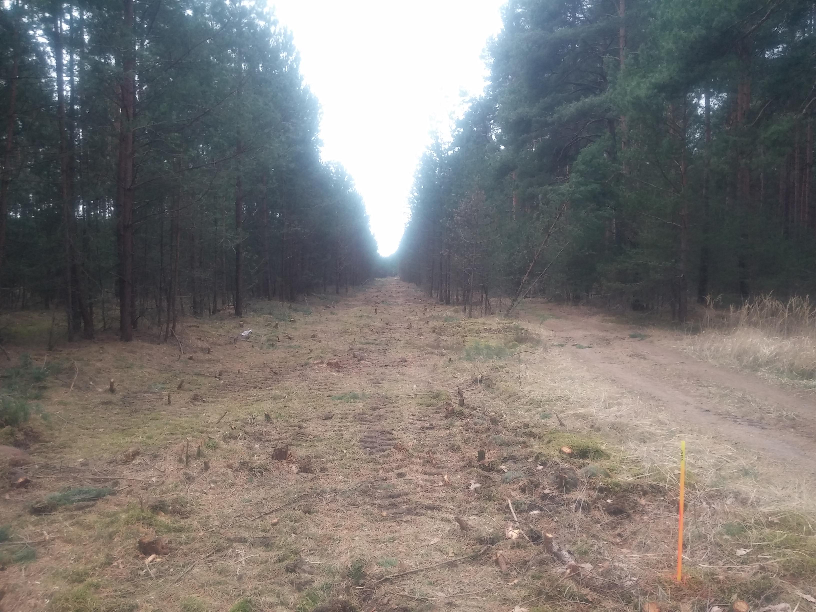 Beelitzer Trumpf sticht / Vorerst keine Windräder im Reesdorfer Forst