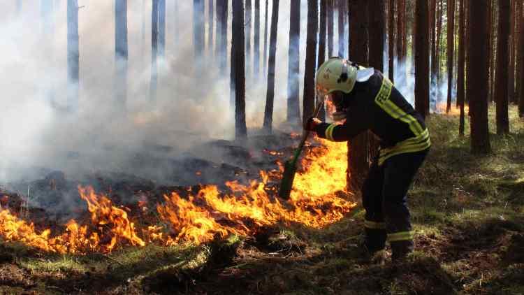 Waldbrandbilanz 2018 – erschreckend … und dennoch sollen Windkraftanlagen in Wälder gestellt werden!