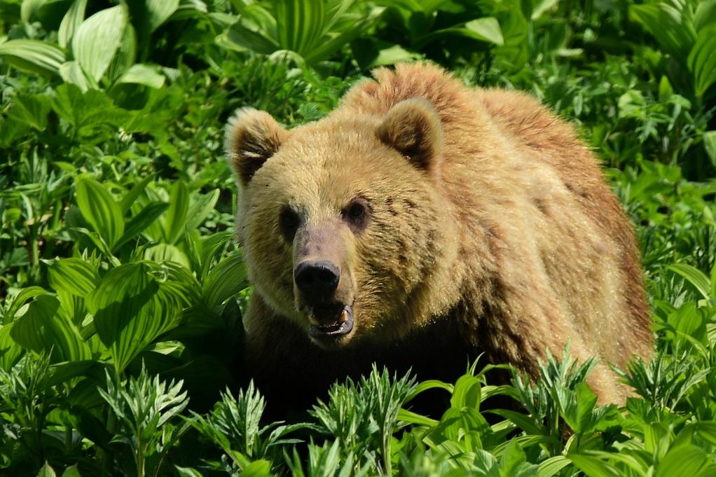 Unter Bären, Geysiren und Vulkanen im Fernen Osten Russlands (Kamtschatka) / Vortrag am 01.02.2019 / 19 Uhr in Fichtenwalde / Hans-Grade-Haus (Am Markt 1)