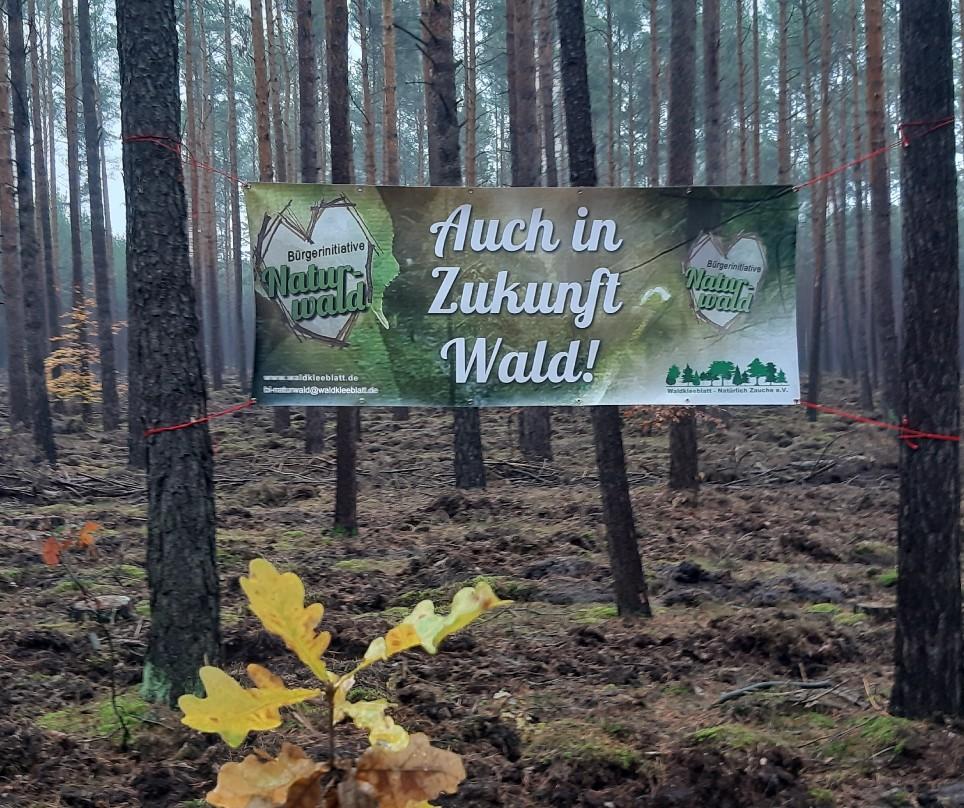 Anerkennung der Klimaschutzleistung von Wald, Wiesen und Äcker – das regelt die EU-Verordnung LULUCF