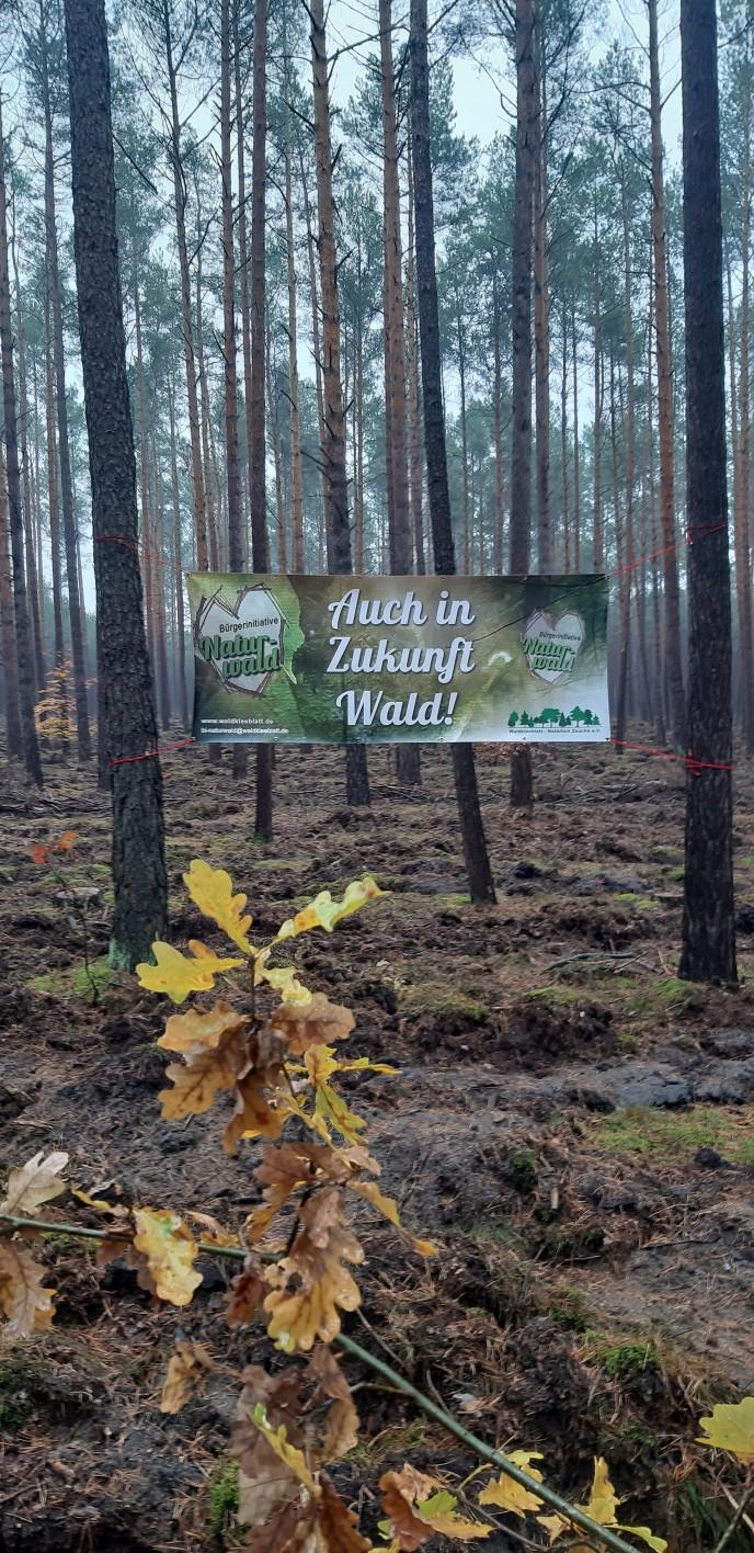 """""""Zwischen Kiefern und Eichen / Unser Brandenburger Wald gestern – heute – morgen""""."""