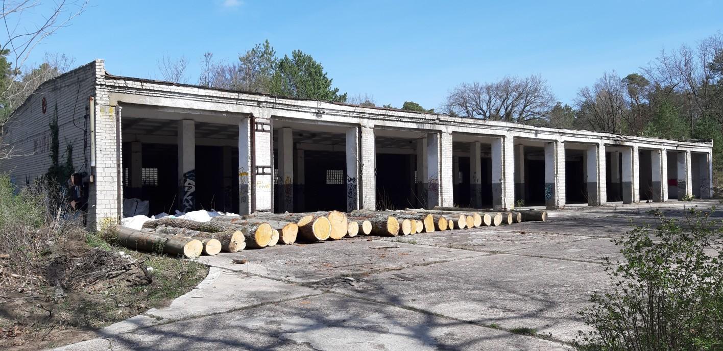 Widerrechtliche Baumfällungen auf dem Quartiergelände in Beelitz-Heilstätten / Pressemitteilung der Bürgerinitiative Naturwald